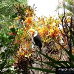 Fond-ecran-Bolivie-Santa Cruz - Toucan