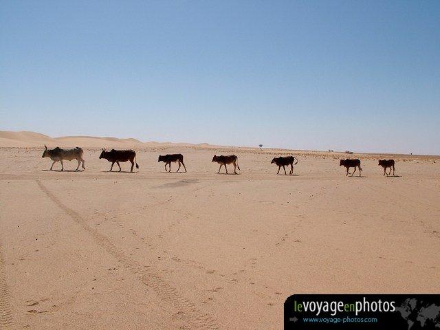 Le Voyage En Photos Afrique Mauritanie Banc Darguin 075