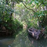 Backwaters 028 - Barque dans canal - Inde